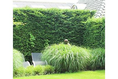Die beliebtesten Heckenpflanzen der Österreicher
