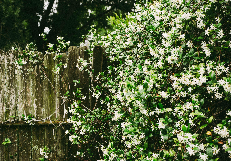 Blog Die Schonsten Fruhbluher Welche Straucher Bluhen Als Erstes