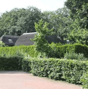 Immergrüne Pflanzen für den Garten und die Hecke