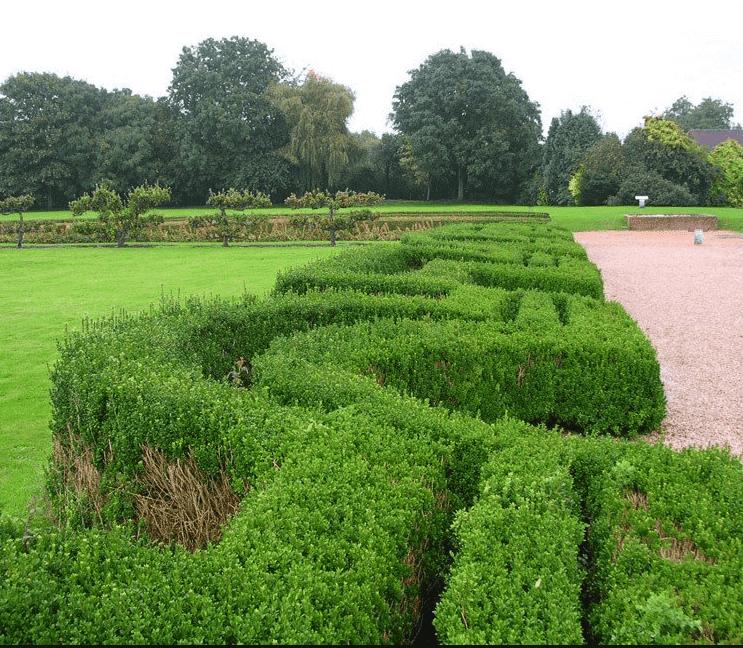 Ligusterhecke pflanzen: Wie viele Pflanzen pro Meter?