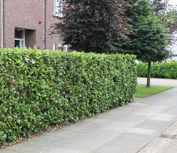 Blog Ideen Fur Einen Naturlichen Sichtschutz Im Garten