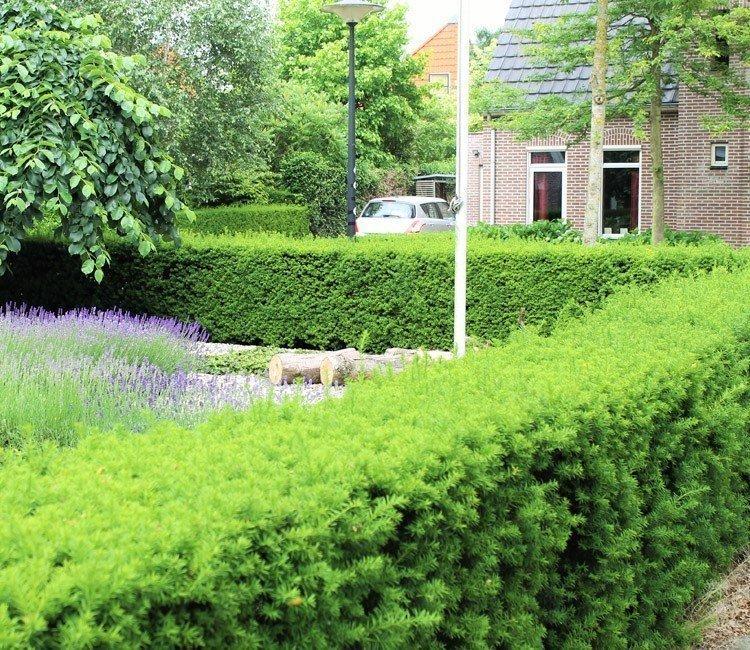 Immergrüne Heckenpflanzen für eine blickdichte Hecke das ganze Jahr