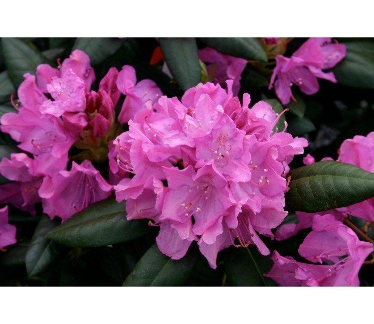 3 schöne Gartensträucher, die im Frühling blühen