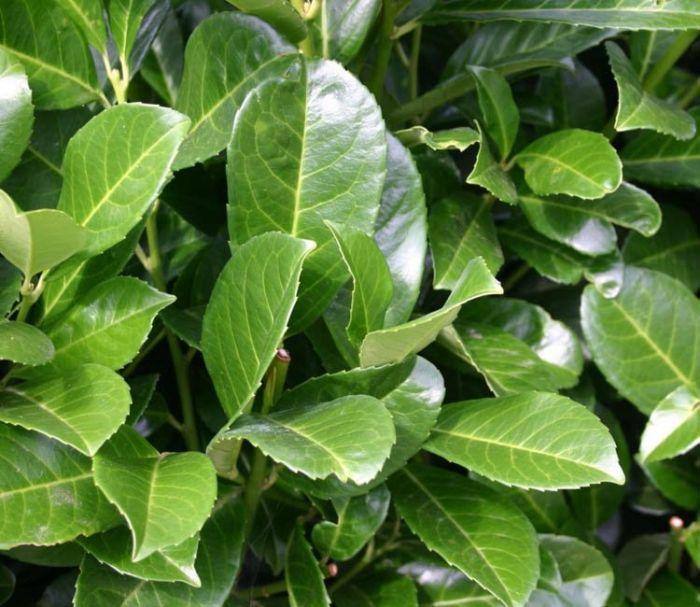 Winterharte Pflanzen im Topf: Geben Sie Ihrem Garten das gewisse Etwas!