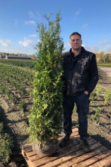 Lebensbaum 'Brabant' Wurzelballen 175-200 cm Extra Qualtität Wurzelballen