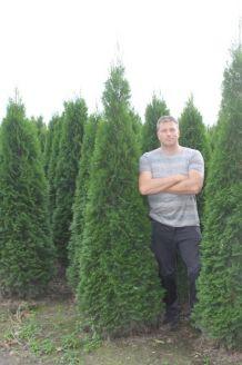 Lebensbaum 'Smaragd' (200-225 cm) Extra Qualtität Wurzelballen