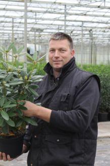 Rhododendron Catawbiense Boursalt (40-50 cm) Topf